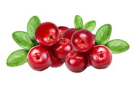 Cranberry Absolute natural weight loss at home